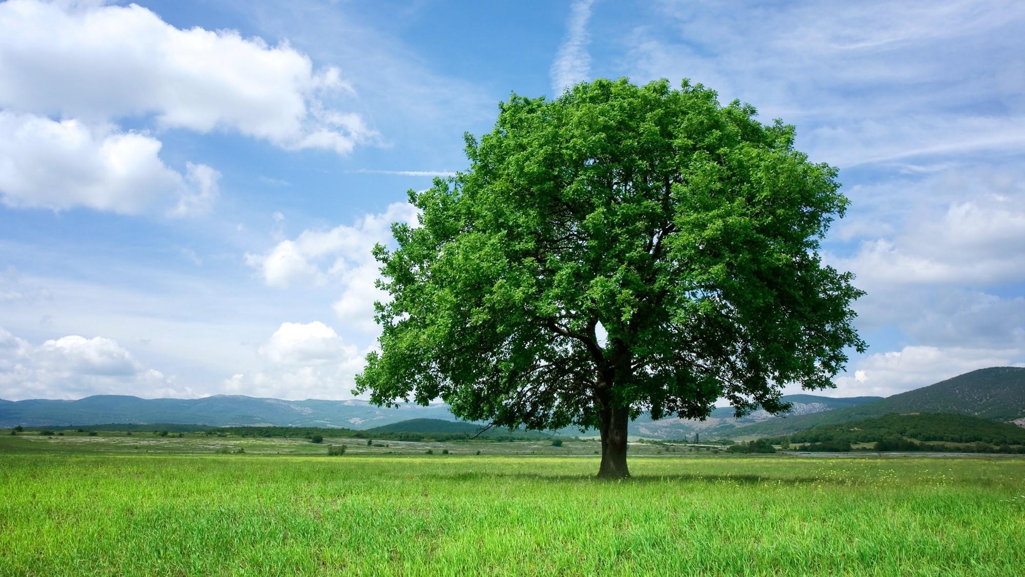 Een boom die er scherp en helder uitziet
