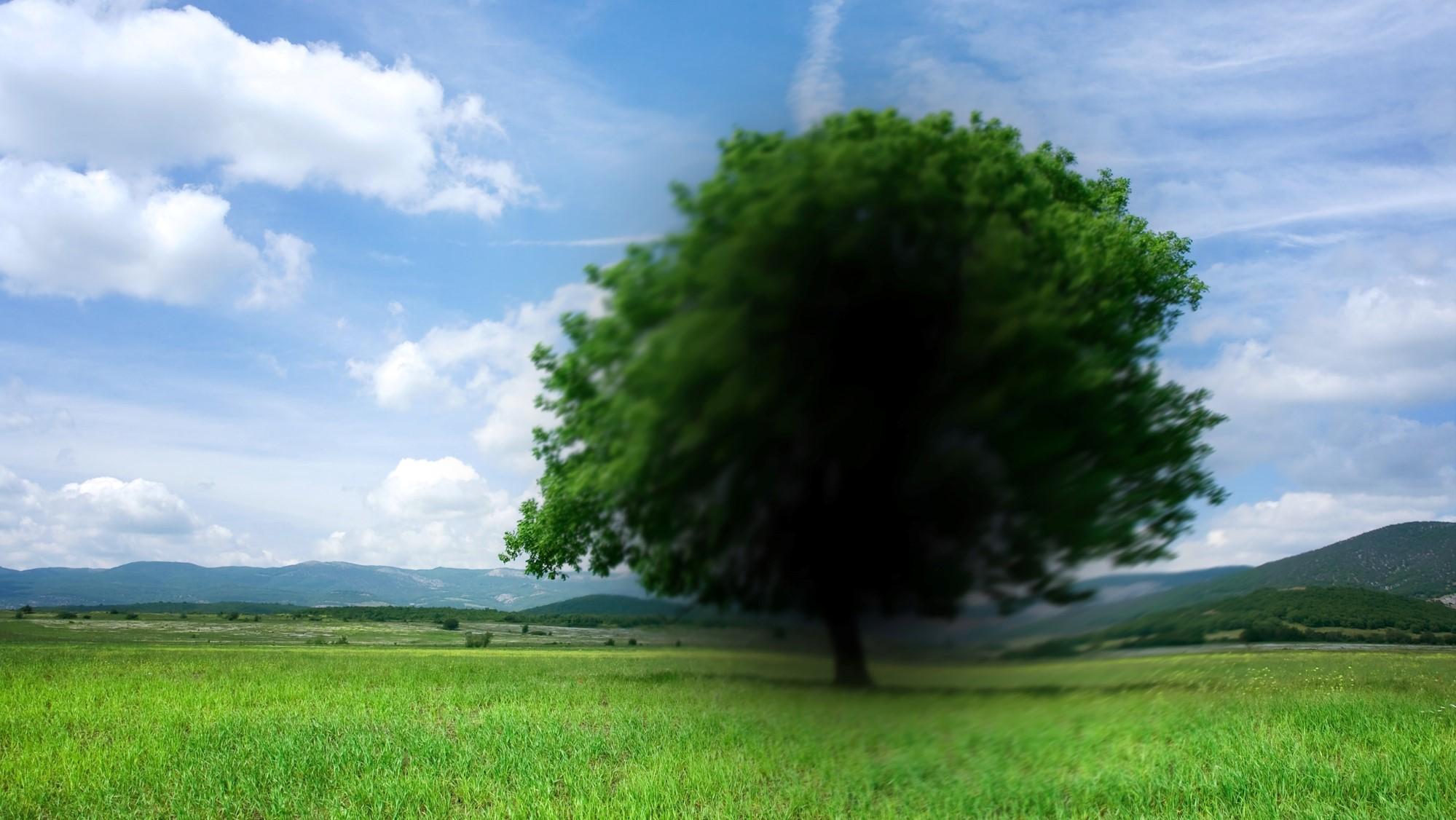 Een boom met zwarte vlek in het centrum van het beeld.